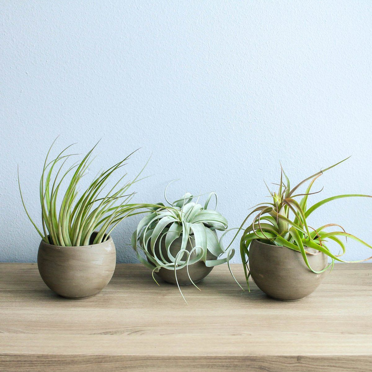 Tillandsiart-Airplant Planter-Hand blue AIR PLANT NOT INCLUDED