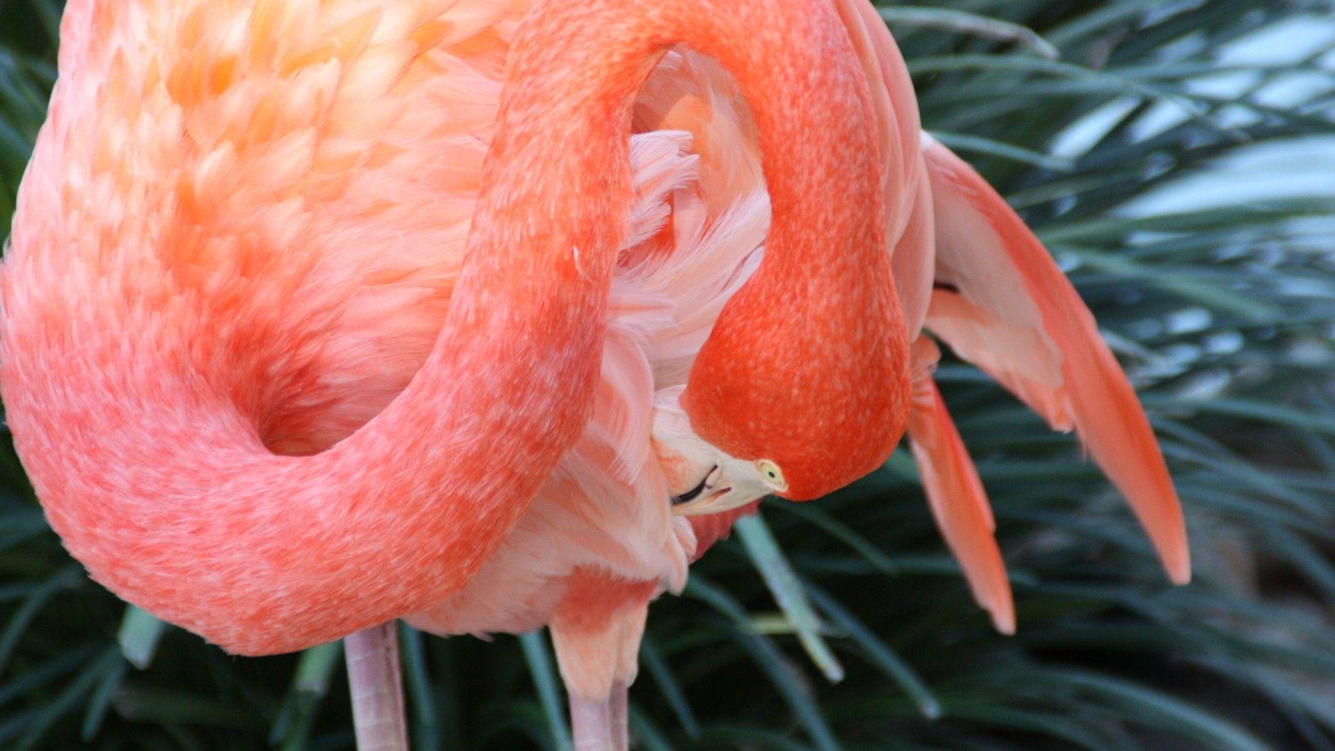 Flamingo, Sun Diego, zoo, bird, red, plumage, tourism, pond
