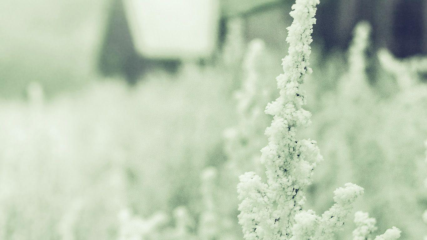 Wallpaper Httpsdesktoppapersmz71 Snow White Winter Flower