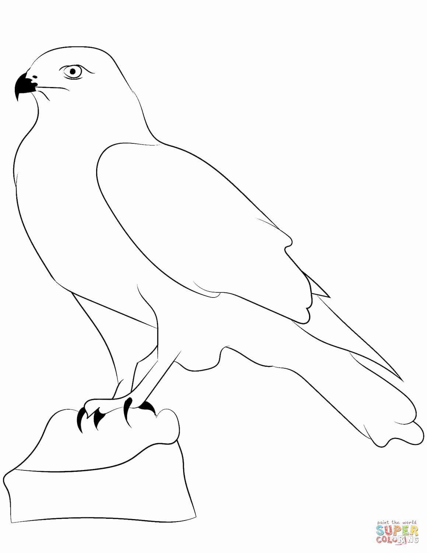 Peregrine Falcon Coloring Page Elegant Falcons Coloring Pages Cool Coloring Pages Turtle Coloring Pages Stitch Coloring Pages