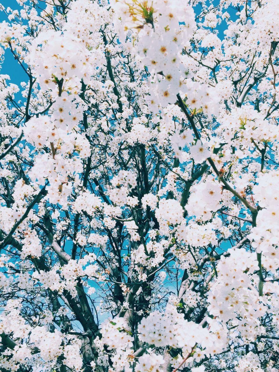 White Flower Aesthetic Tumblr