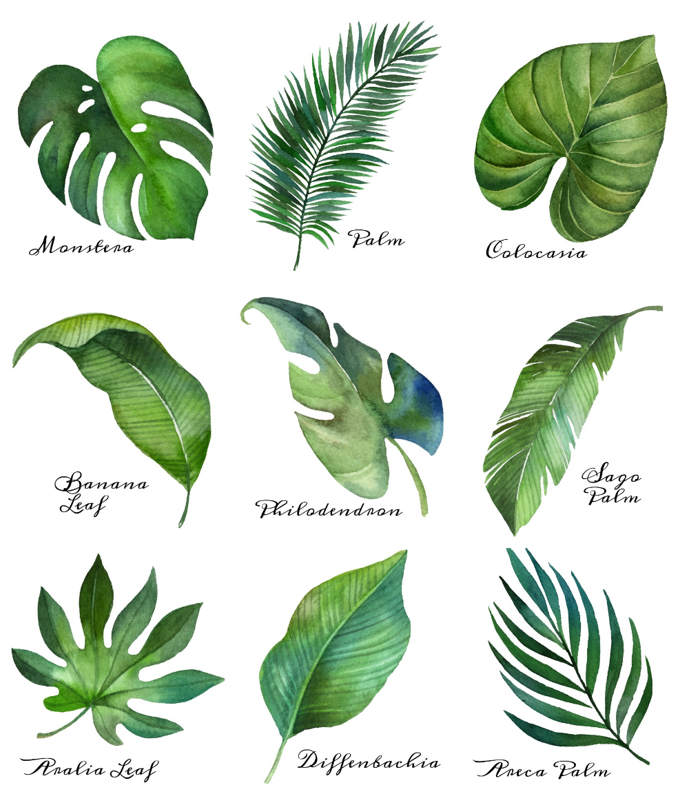 Tropical Leaf Free Printable Art {Series of 9} | The Happy Housie -   18 tropical plants Watercolor ideas