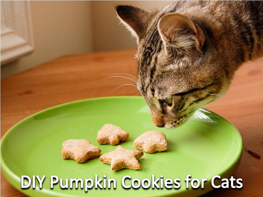 DIY Pumpkin Cookies For Cats (With images) Cat treats