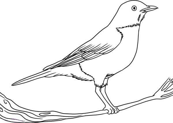 Free coloring pages of mockingbird