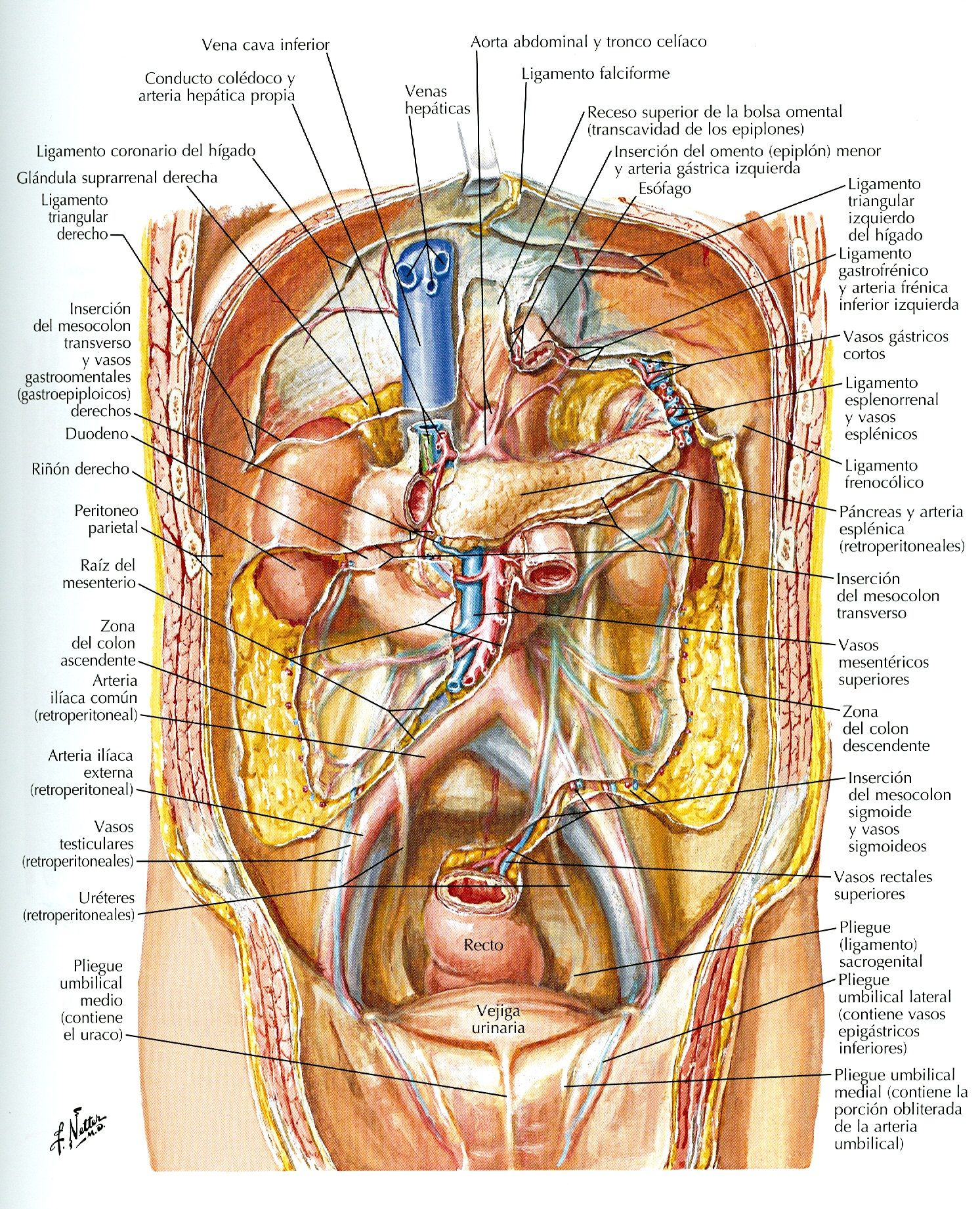 Pin by Padalavamshikrishna on Digest | Pinterest | Human body