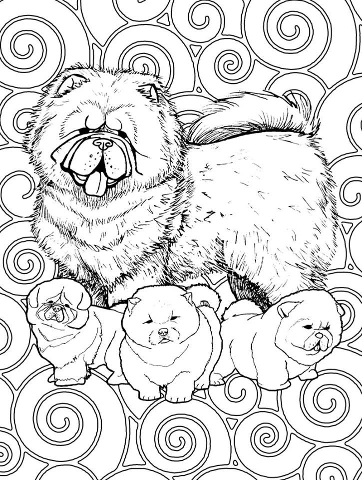 Chow Chows | Chow chow--my favorite dog | Pinterest | Mandalas ...