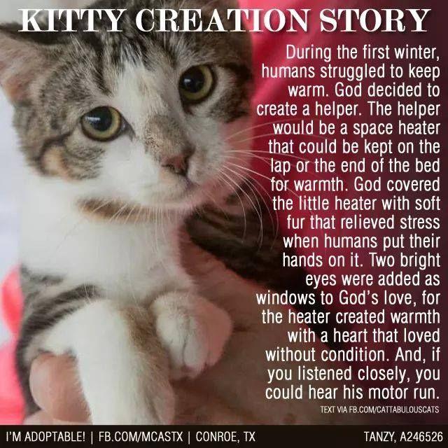 Crazy Cats Animals Kittens