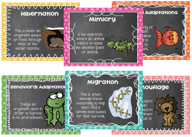 Animal Adaptations cards include mimicry, hibernation, physical ...