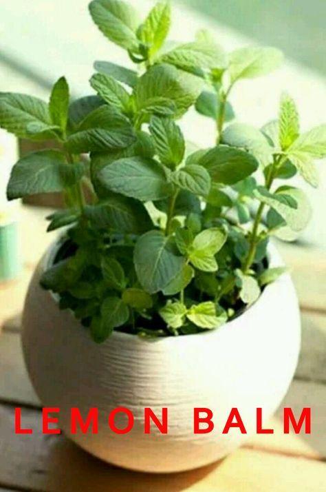 12 Best Herbs To Grow Indoors Best Herbs To Grow 640 x 480