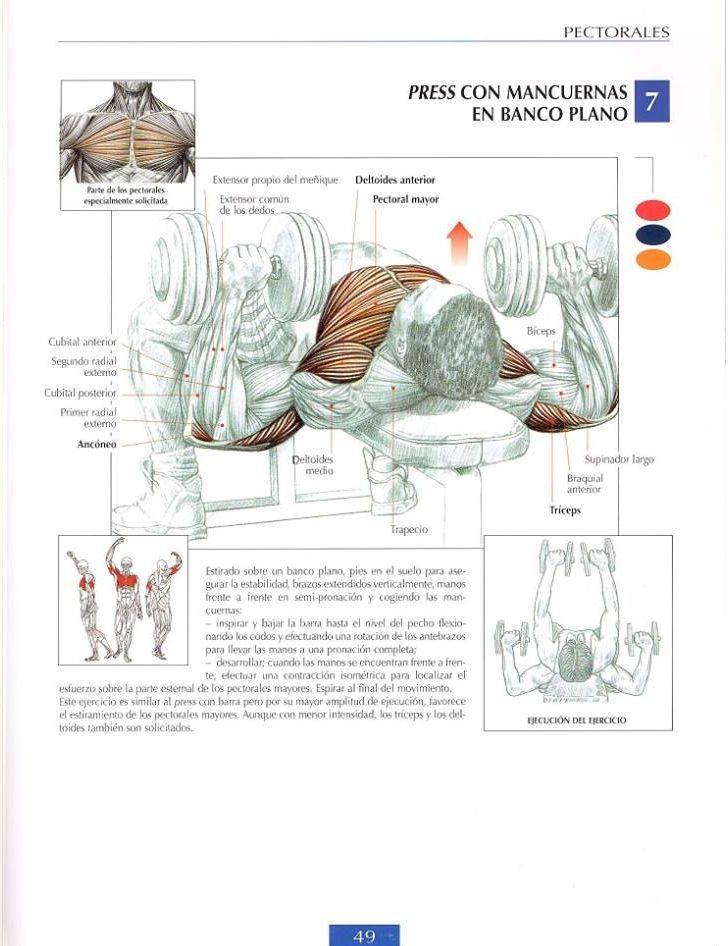 Pin de Jayson Patterson en Anatomy | Pinterest | Ejercicios, Fitness ...