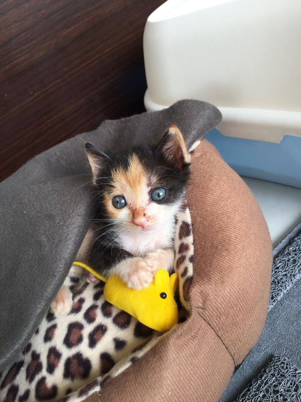 A Man Took In A Tiny Kitten Who Was Rejected By Her Mom And Became Her New Dad In The Months That Followed He Raised T Gorgeous Cats Tiny Kitten Pretty