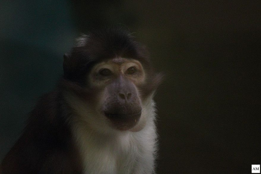 Monkey at Rotterdam Zoo. by Anne Marleen Olthof on 500px