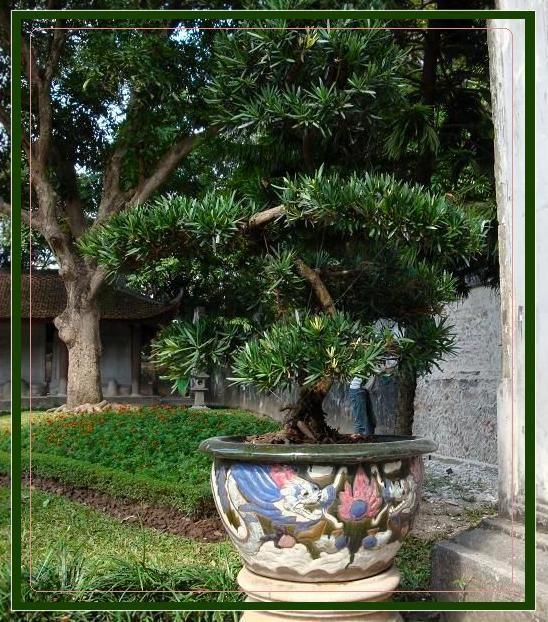 Bonsai w egzotycznym ogrodzie
