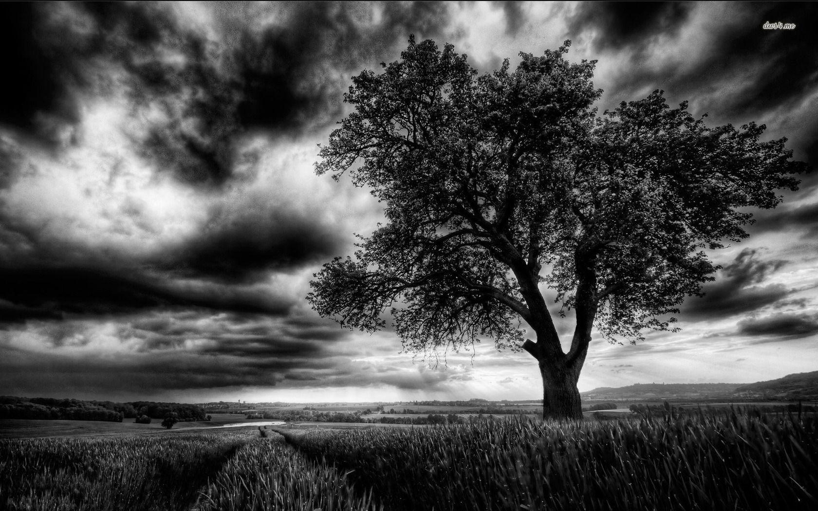 Dark Tree On The Field Hd Wallpaper Field Wallpaper Dark Tree Artistic Tree