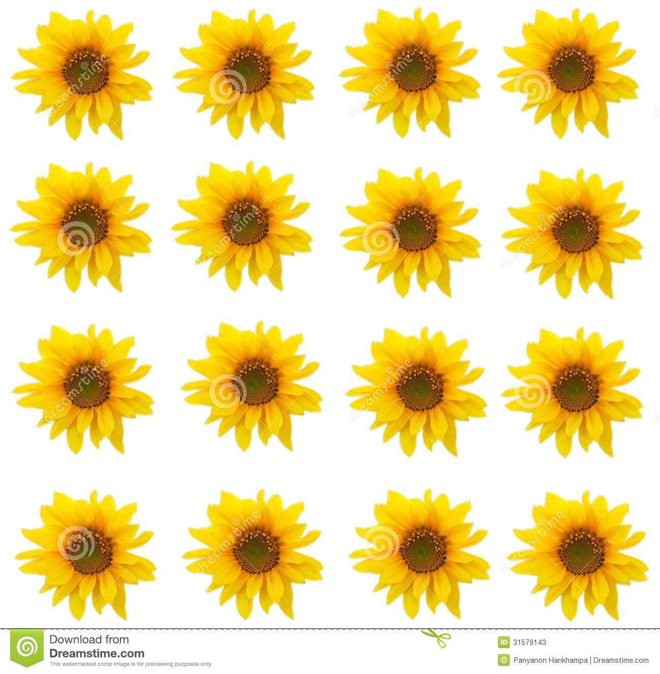sunflower sunflower background pattern stock photos