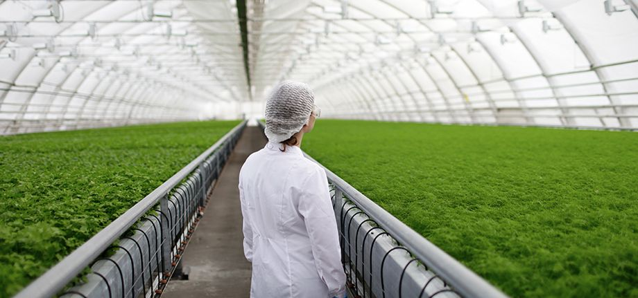 The Future of Food Safety FAO Food and Agriculture