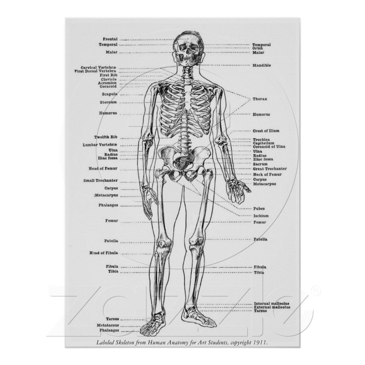 Cru - squelette marqué posters de Zazzle.fr