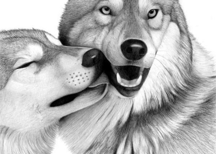 Desenhos Realistas Lobo
