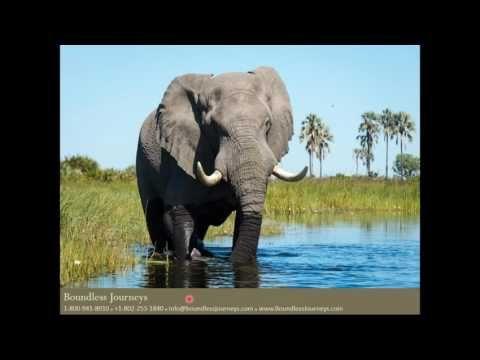 Boundless Journeys Botswana Webinar - YouTube | Botswana