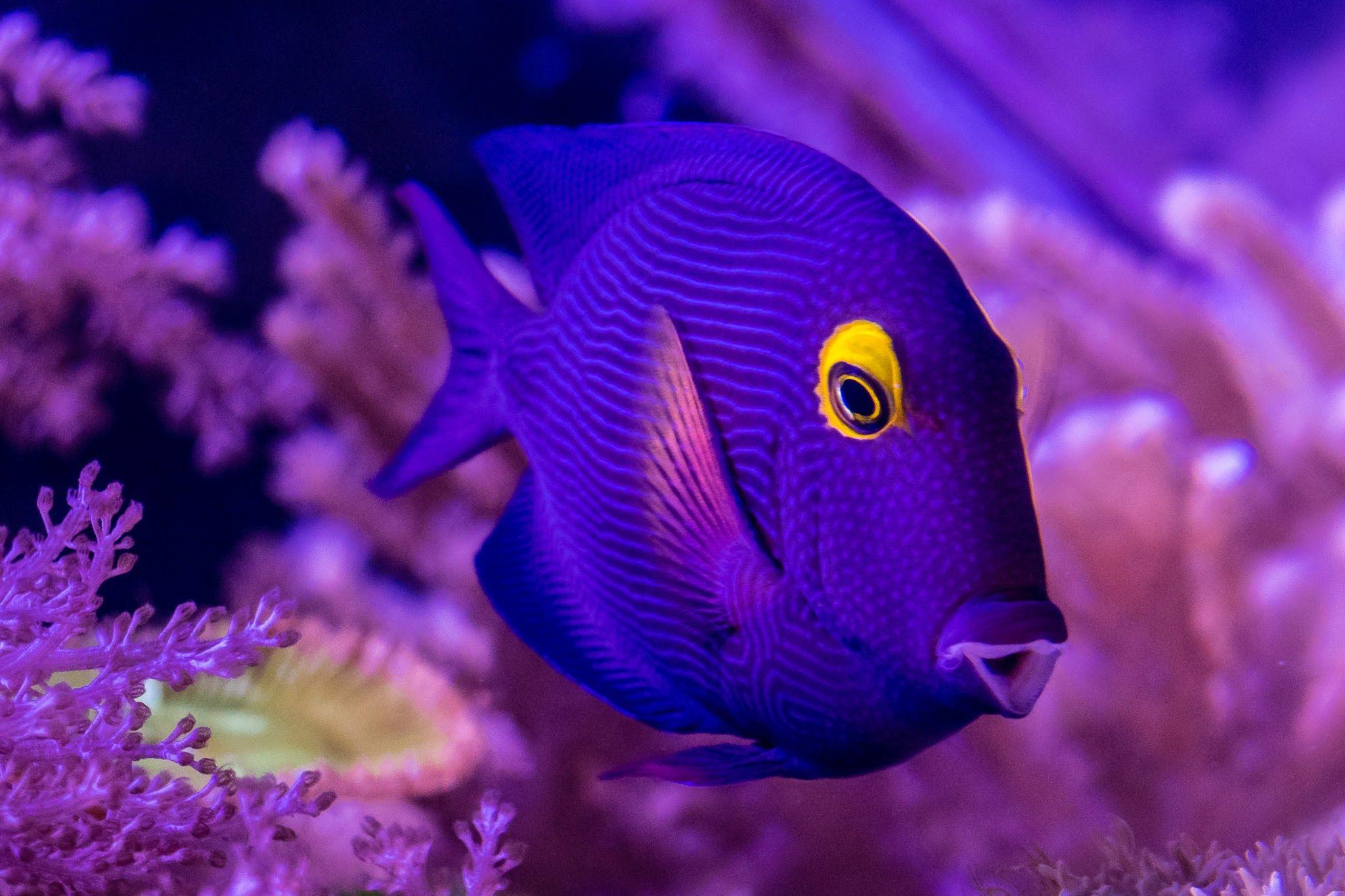 Dori Fish Photography Aquarium Dory Fish Fish Pet Fish