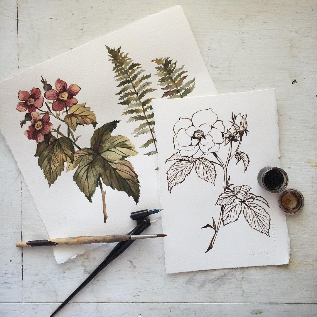 Floral ink illustration and water color classic vintage drawing