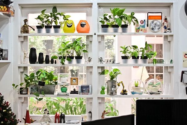 Plants Can Go On Shelves Too If The Area Is Sunny Enough