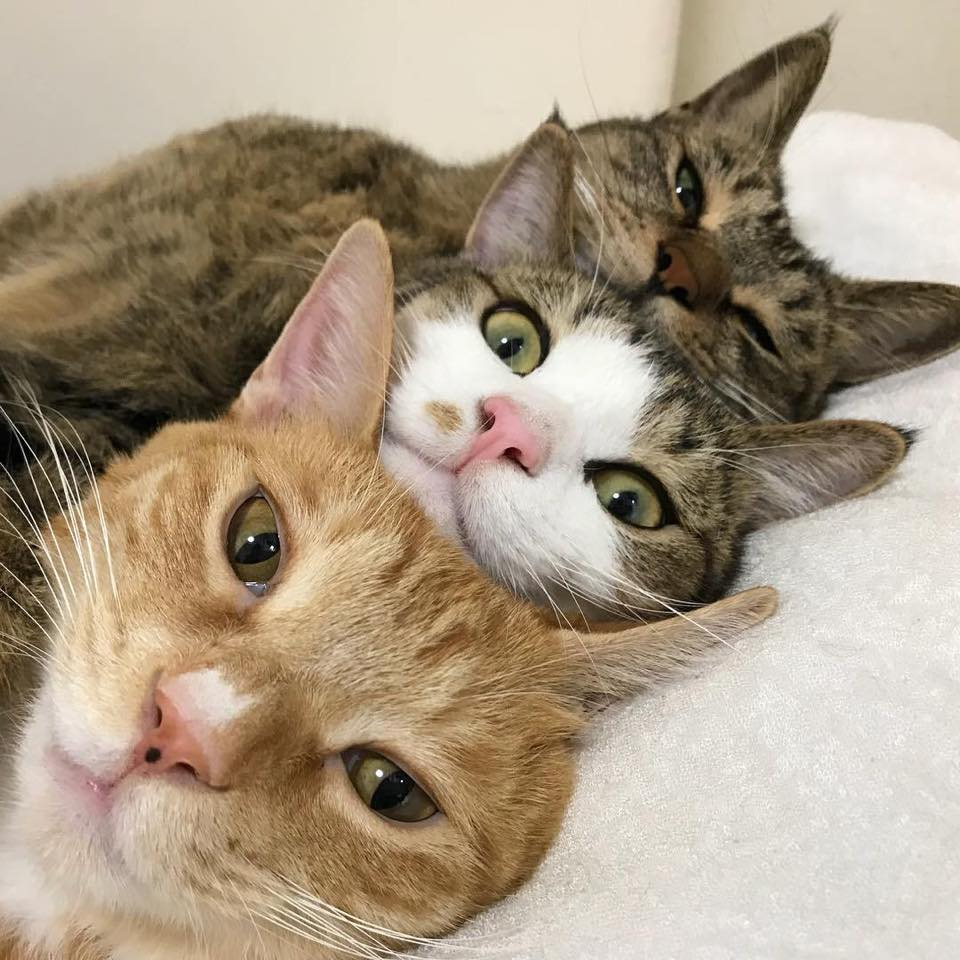 Sleep Over Cute Cats Kittens Cute Animals