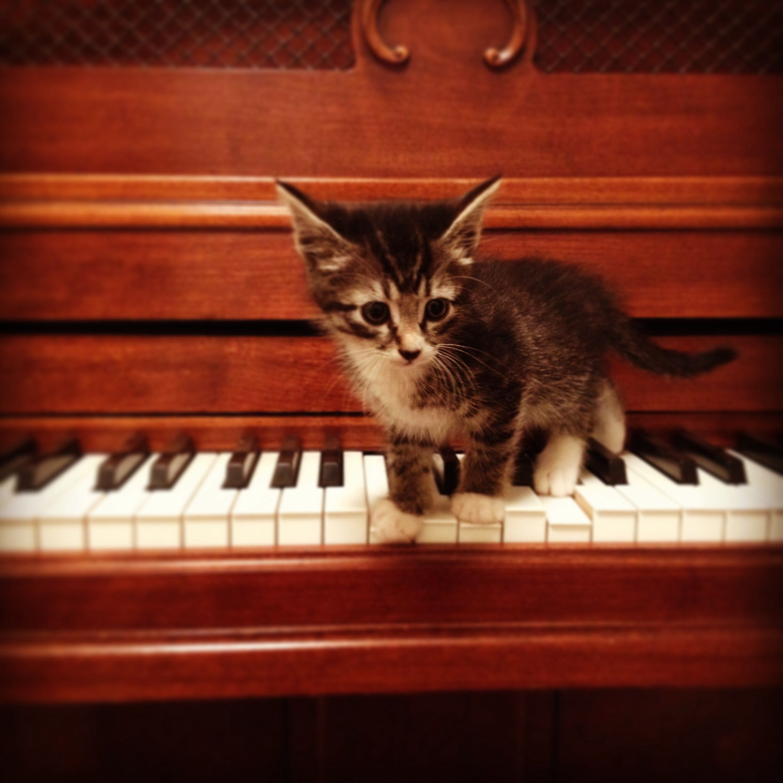 Кошки и пианино картинки