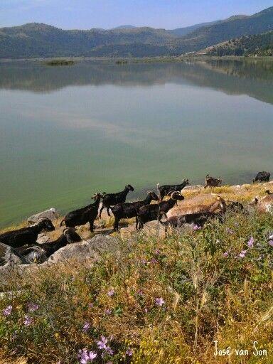 Greece...... amazing Zazari Lake, Macedonia