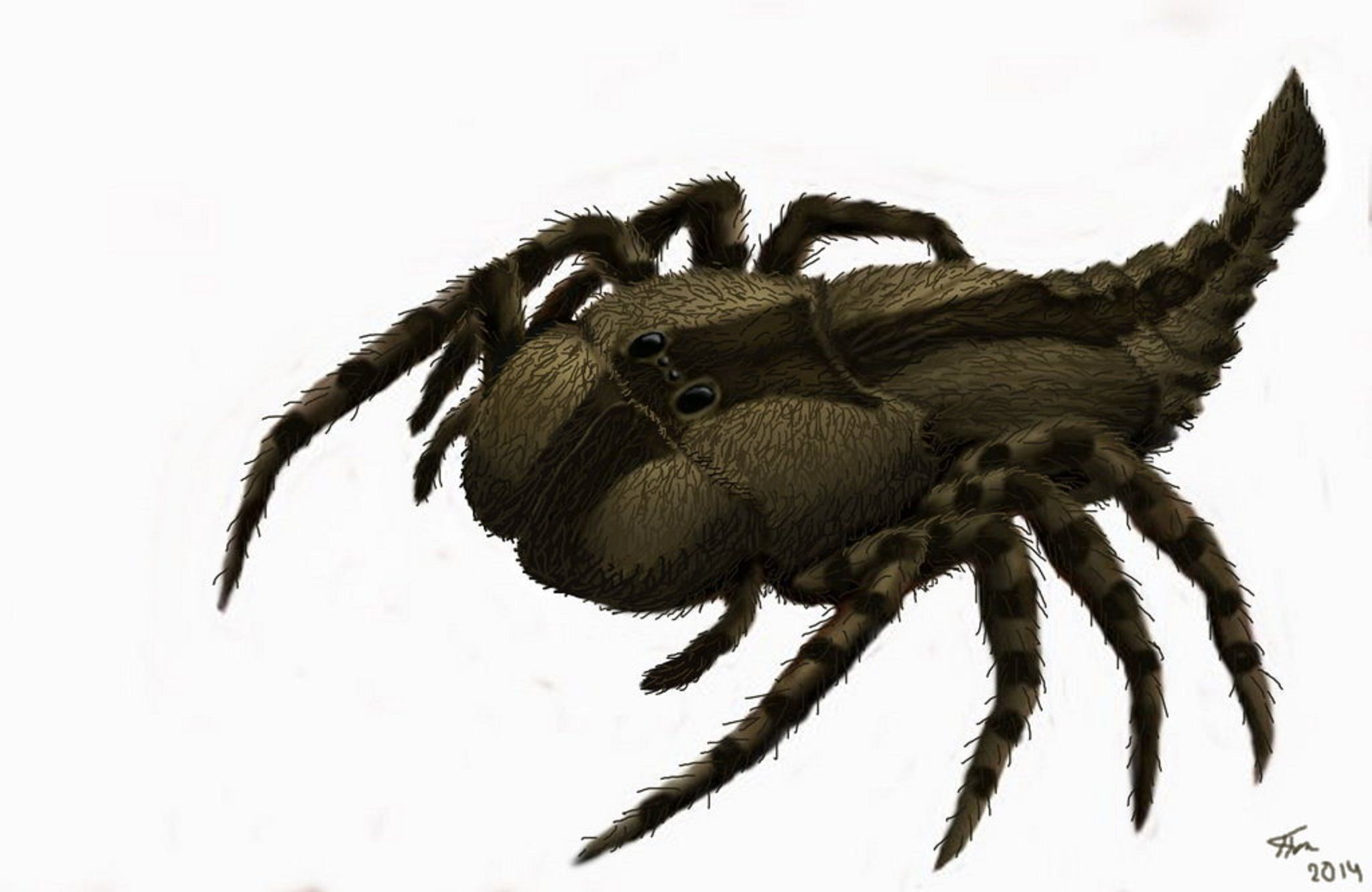 "Art illustration - Arachnids - Megarachne (""giant spider ..."