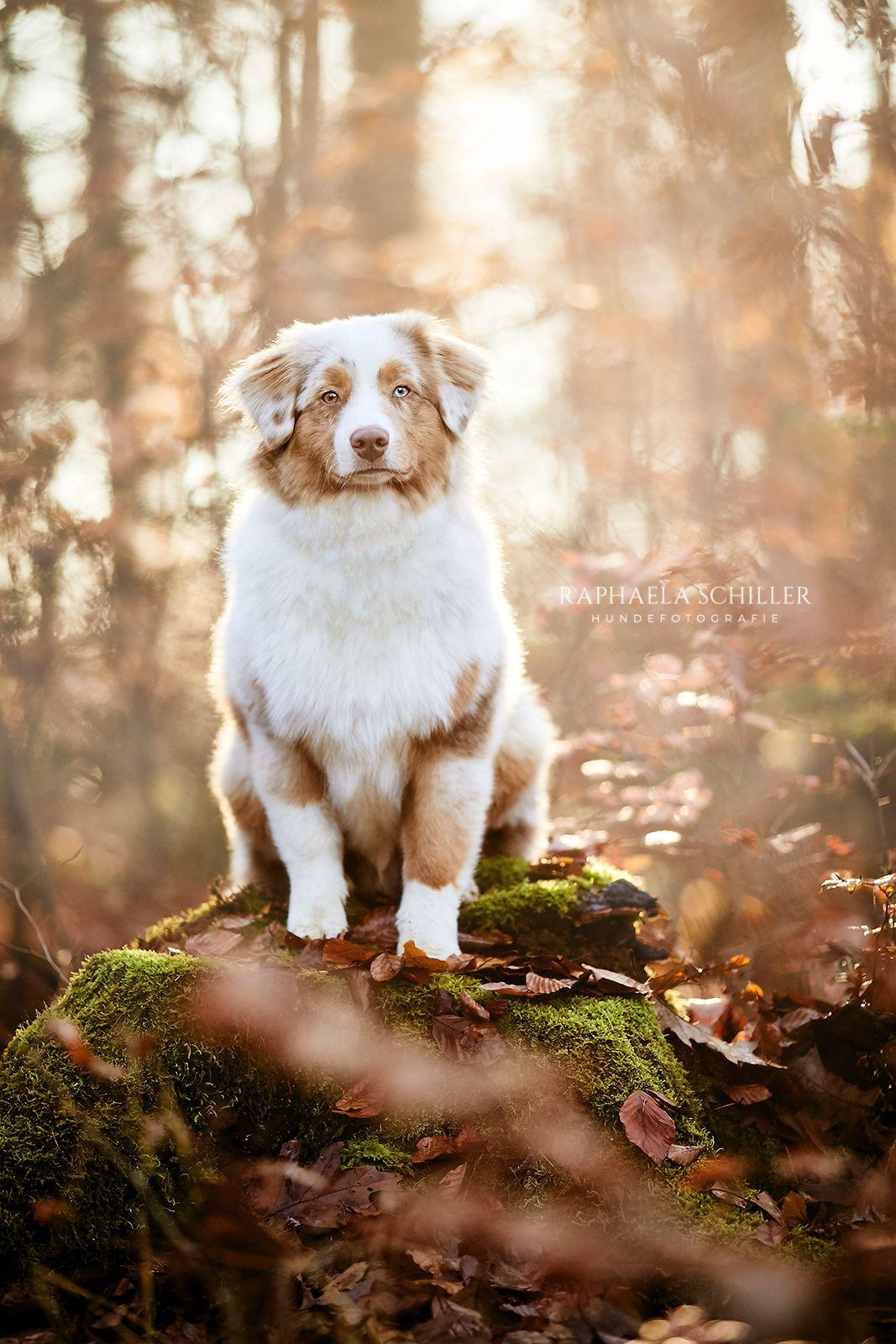 Charaktervolle Hundefotografie von Raphaela Schiller in