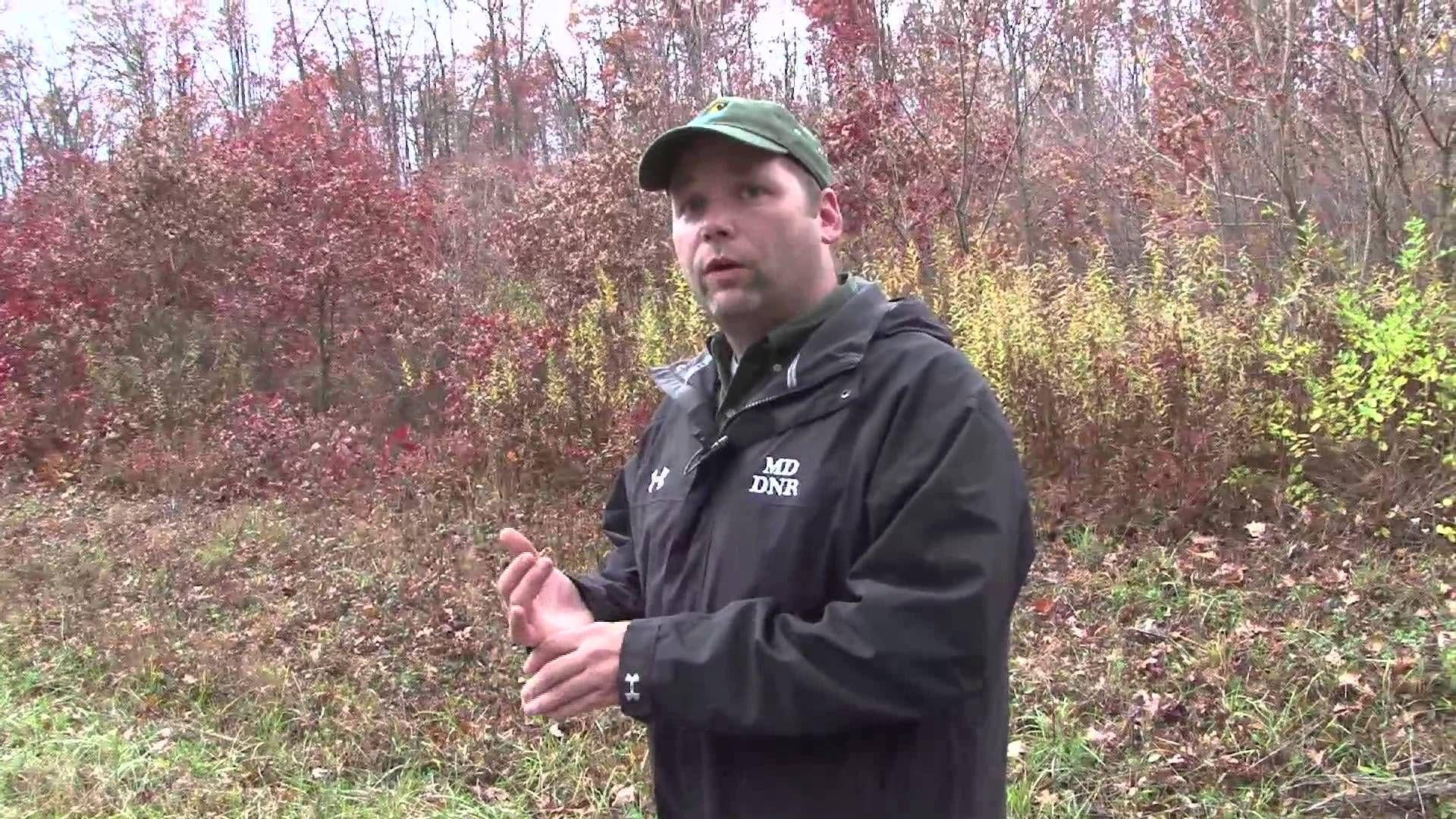 Maryland black bear hunt winter 2012 black bear hunt bear