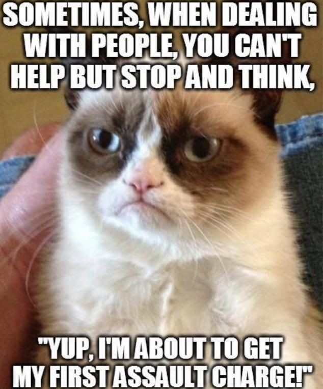 daily occurrence funny pinterest bail money grumpy cat and humor