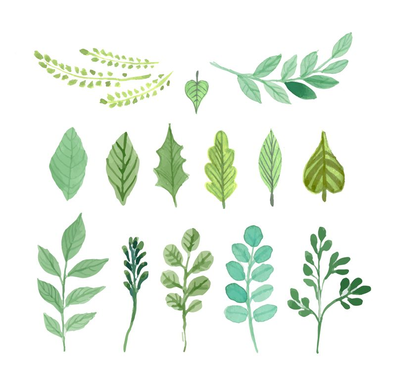 14 Watercolor Green Leaves Vector Material Watercolor Leaves