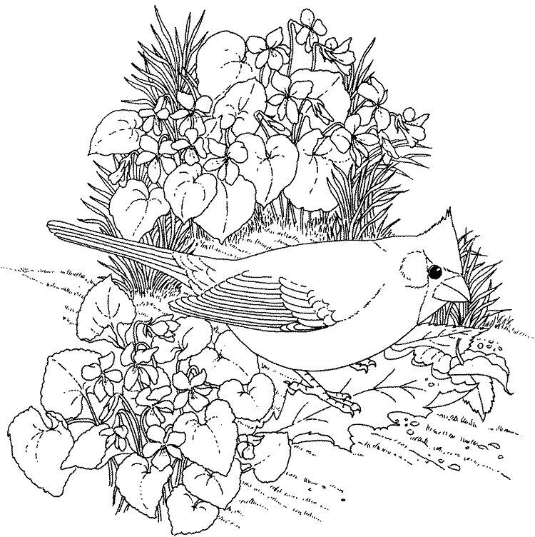 Free Printable Realistic Flower Coloring Pages Bird Coloring Pages Flower Coloring Pages Spring Coloring Pages