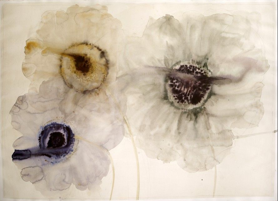 3 anemones watercolor and ink on paper 29.5¨x 43¨