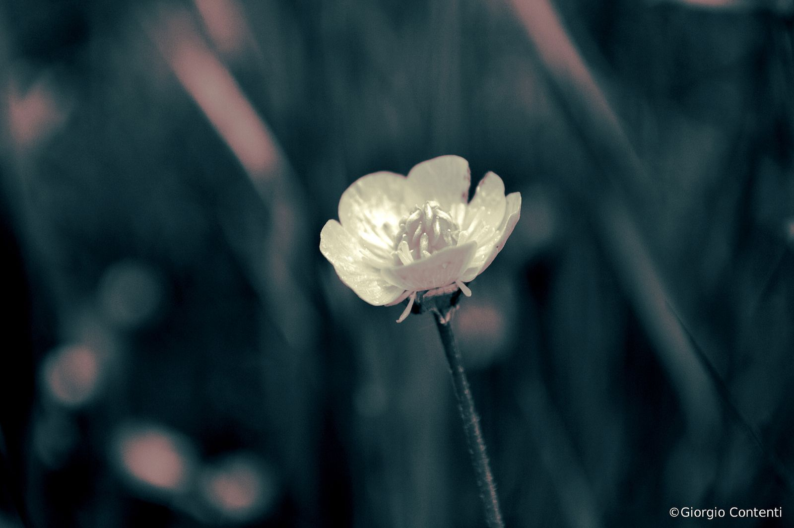 Fiore | Flickr - Photo Sharing!