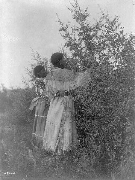 Mandan girls picking berries