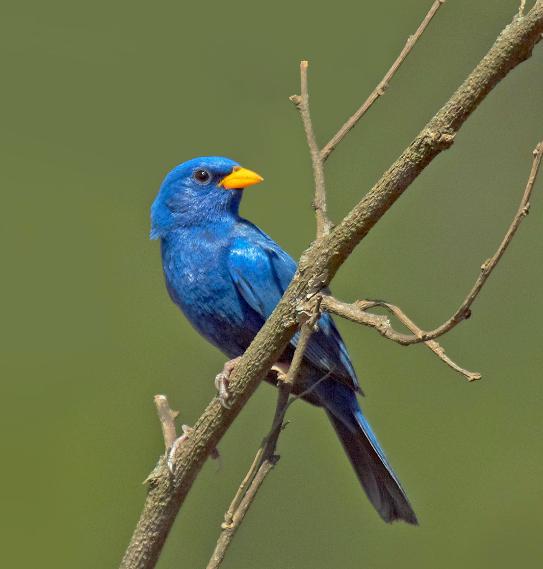 campainha-azul