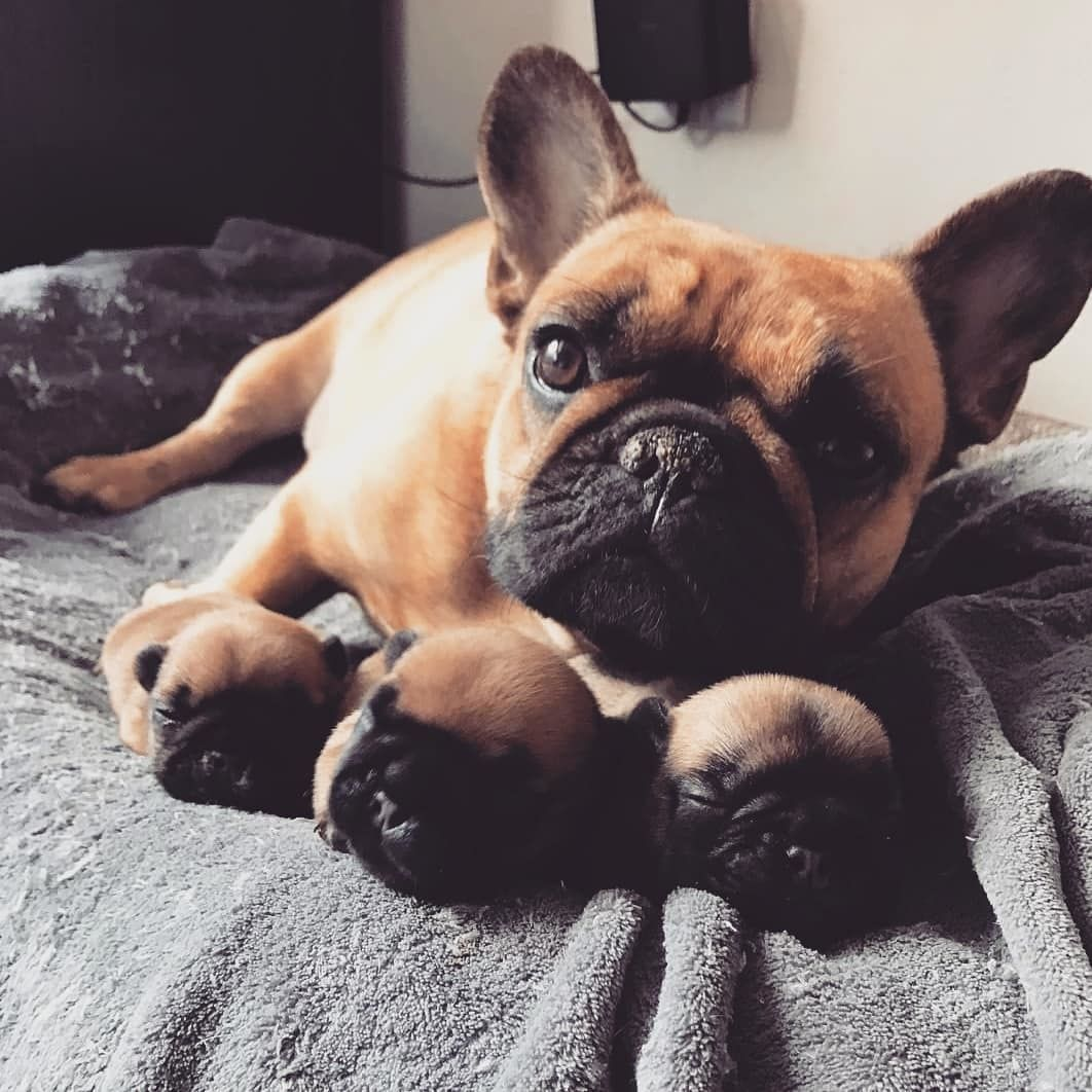 Meet My Family By Nicco The Frenchie Please Follow Us