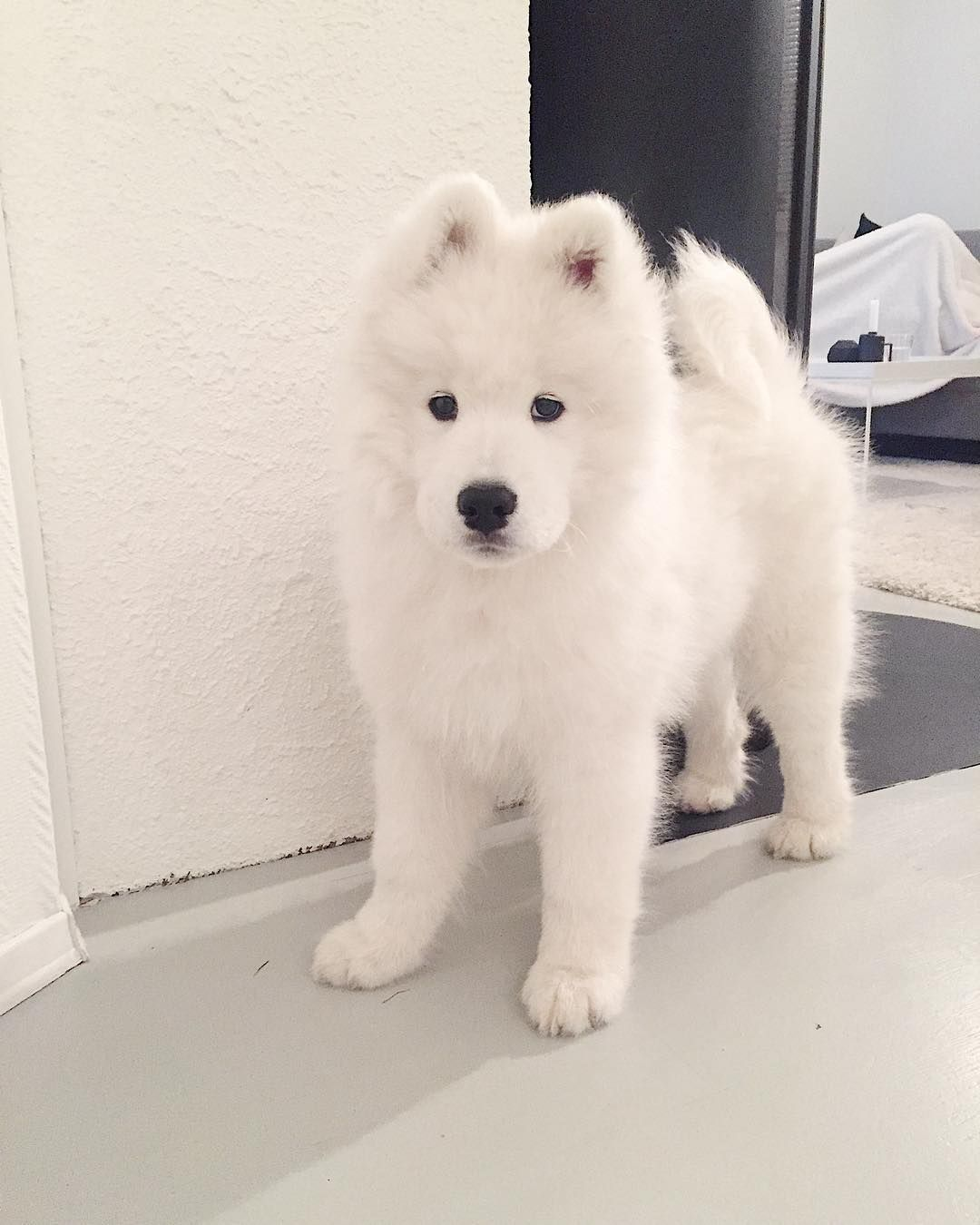 Baby ghost animals pinterest pets puppies and animals