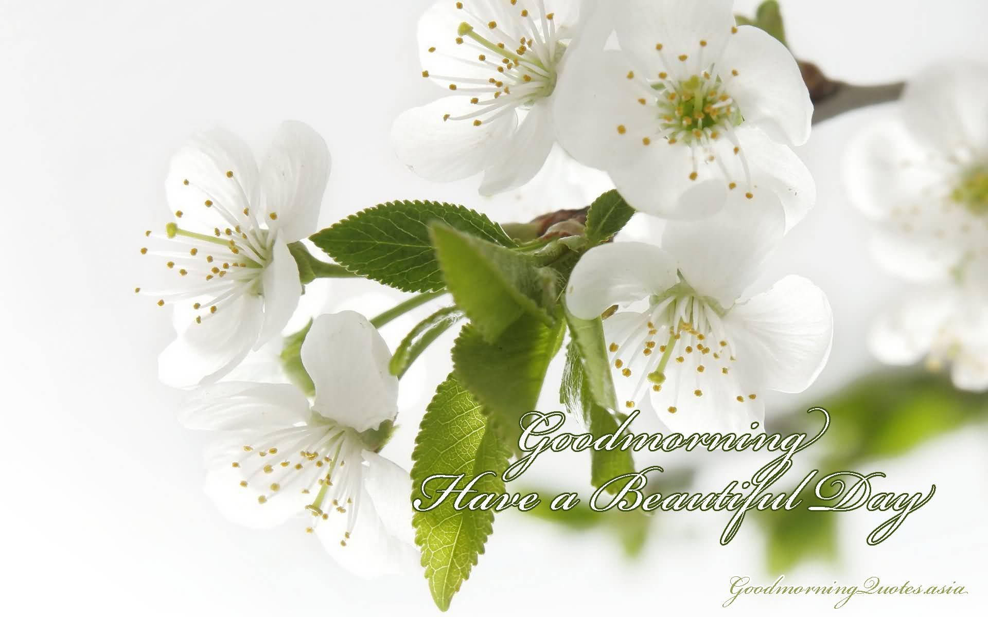 Good Morning Love Images With Flowers Images 13g 19201200
