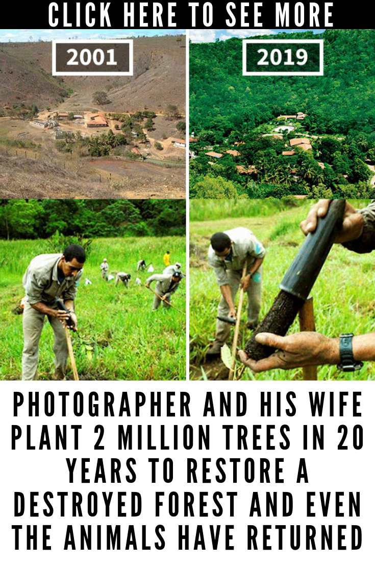 Photographer And His Wife Plant 2 Million Trees In 20 Years To Restore A Destroyed Forest And Even Fun Facts Wtf Fun Facts Destroyed