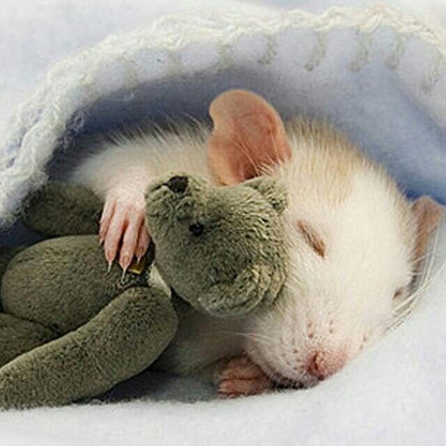 Süße Maus Mäuse Baby Animals Pictures Cute Baby Animals Und