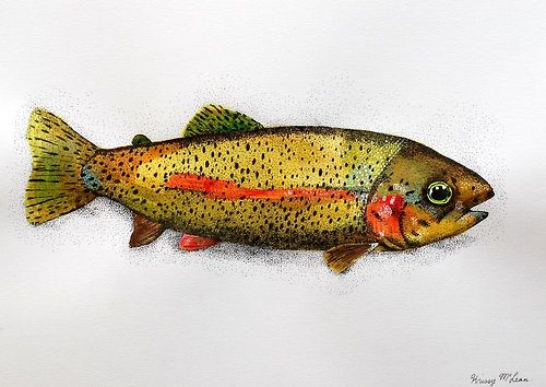 rainbow trout. original painting on paper
