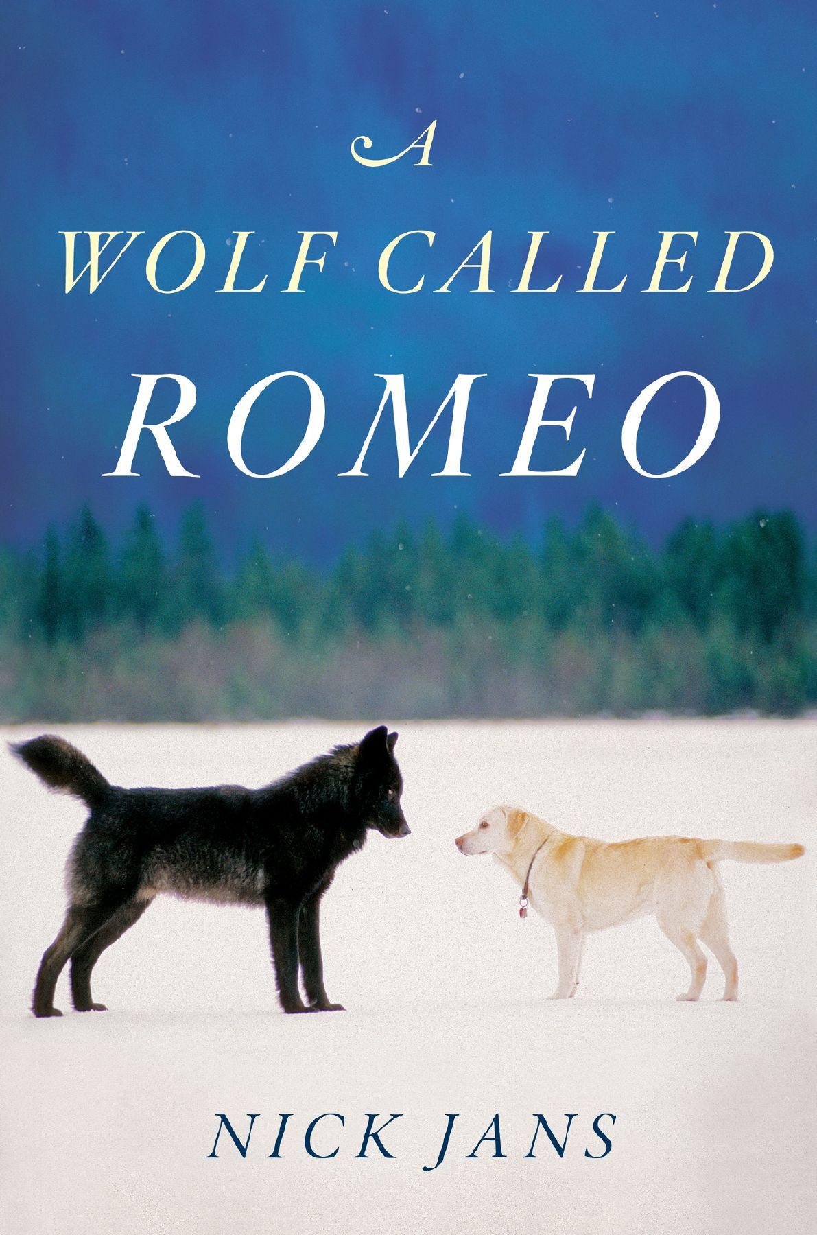 How A Wolf Named Romeo Won Hearts In An Alaska Suburb Wolf Call