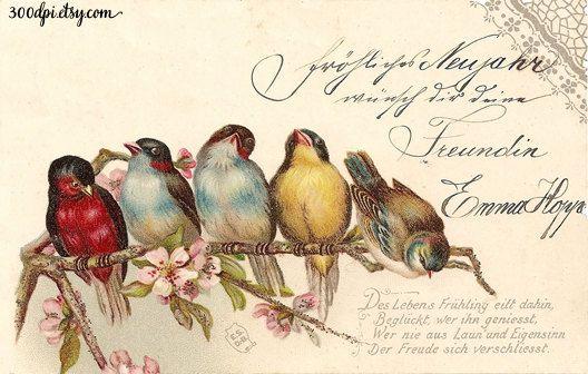 birds and flowers digital vintage antique postcard scan by 300dpi