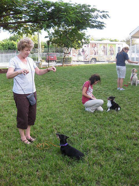 Sarasota Dog Training And Boarding Dog Obedience Classes Dog
