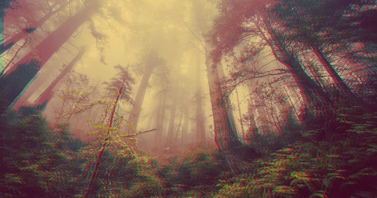 Trippy Forest Made By Me 4k Trippy Laptop Wallpaper Instagram