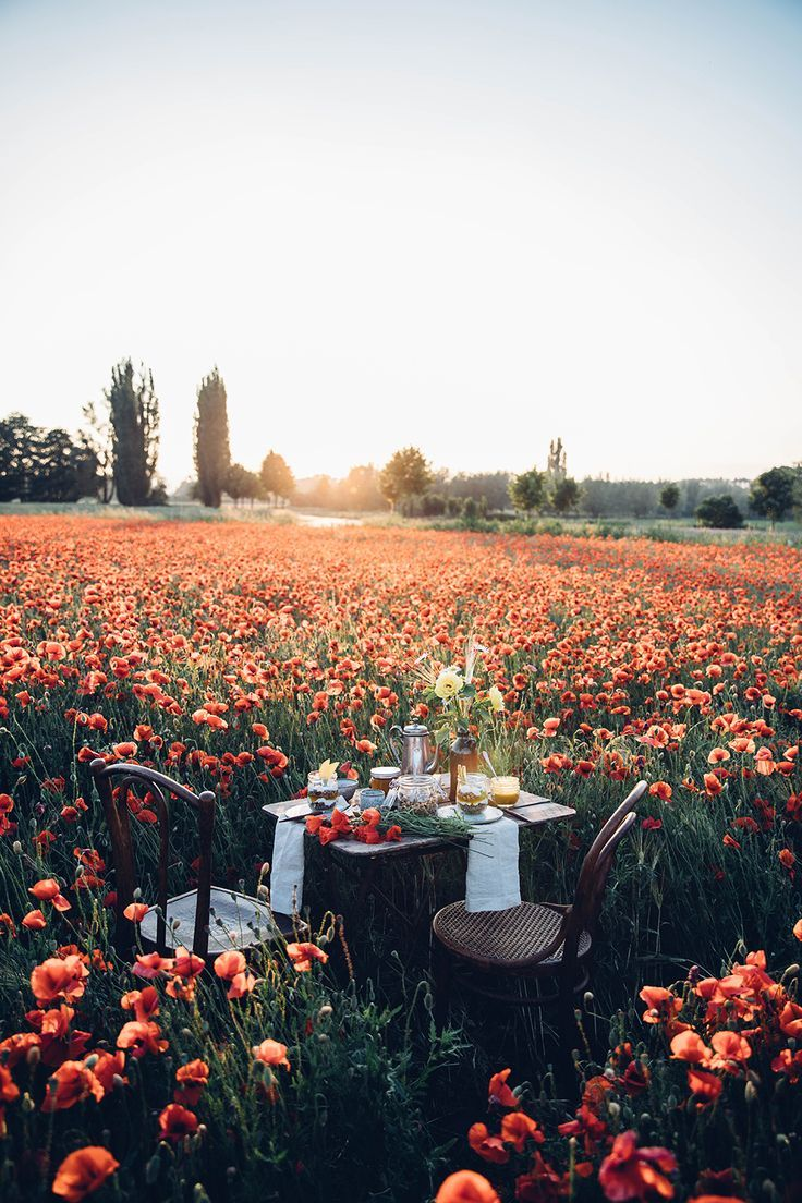 Photo of Gluten-free poppy seed granola – a picnic in a poppy field – …